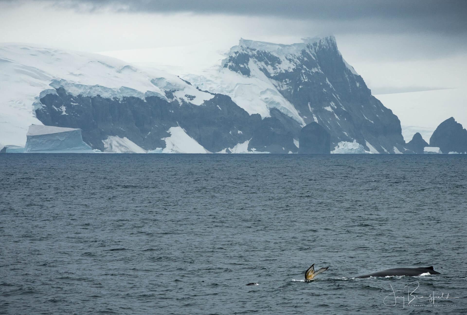 Antarctic Landscape Tour