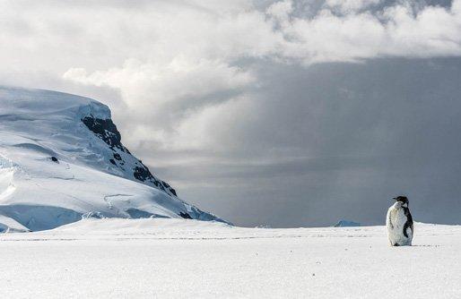 Antarctic Adventure Trip